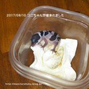 レオパの赤ちゃん