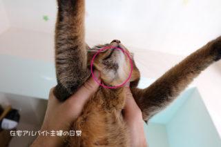 アトピー猫