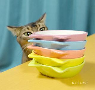 5匹の猫ごはん