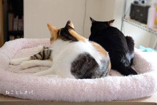 仕事部屋と猫