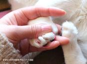 猫の爪が剥がれて治療中