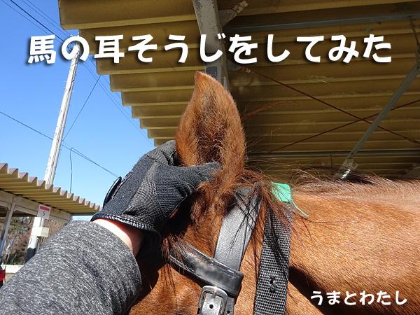 馬の耳掃除