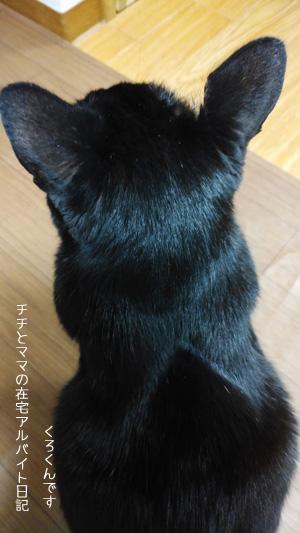 肥満細胞腫の手術した猫