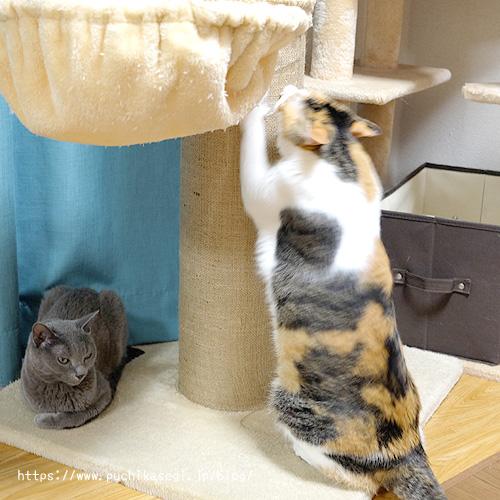 麻布爪とぎポールで爪を研ぐ猫