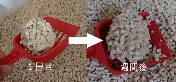 猫砂の比較