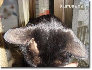 猫の肥満細胞腫の手術後の写真
