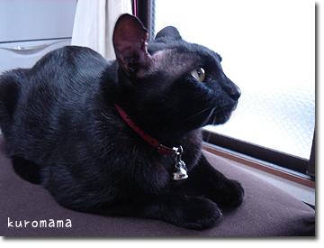 肥満細胞腫の手術をした猫クロード