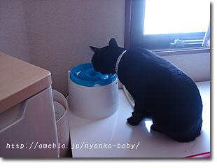自動給水器で水を飲む猫