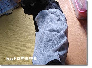 チチとママの気ままな節約日記-猫シャンプー